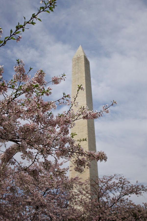 Washington Monument, DC, cherry blossoms, 2014 Cherry Blossom Festival