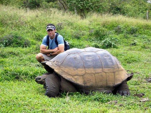 Ajorbahman 39 s collection alien giant tortoise helps for Caracol de jardin que come