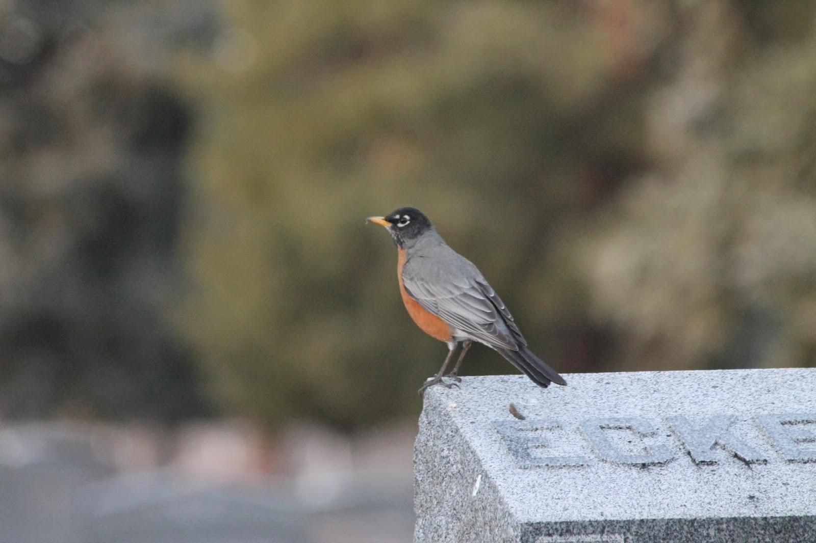 the flying mullet cemetery birding