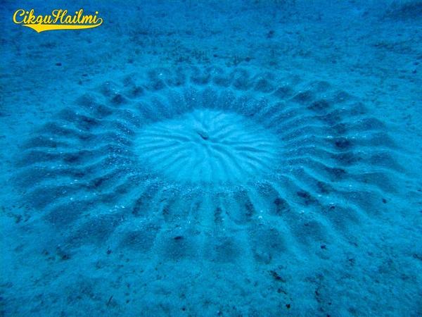 Bulatan Misteri di Dasar Laut Jepun
