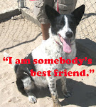 Featured Adoptable Pet Click Image