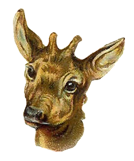 antelope stock image clip art