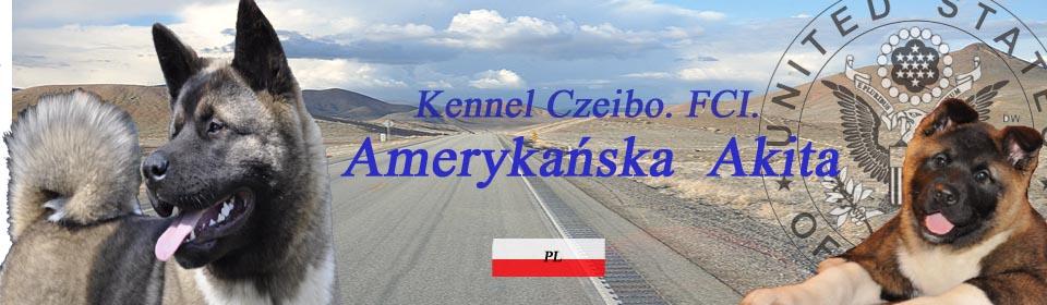 Kennel Czeibo               Akita Amerykańska