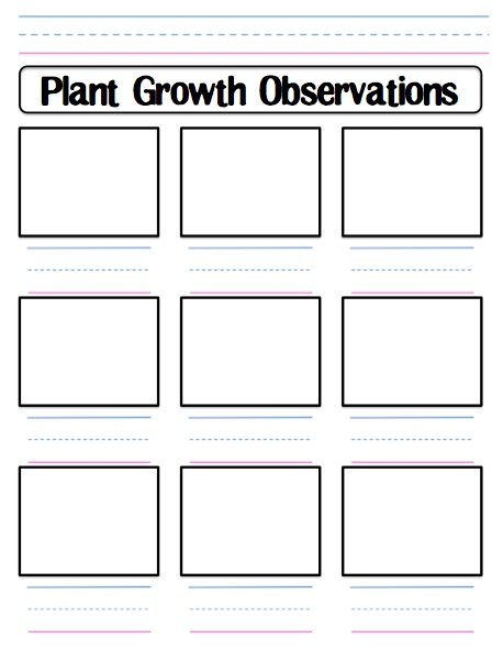 Plant Science Experiment Worksheet In Addition Synonyms Worksheet ...