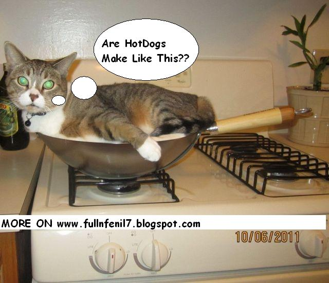 Animals with Funny Sayings