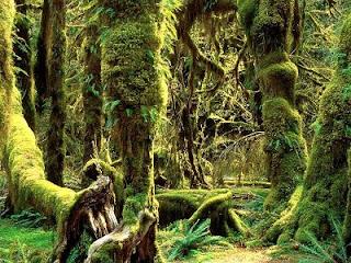 photo keindahan alam