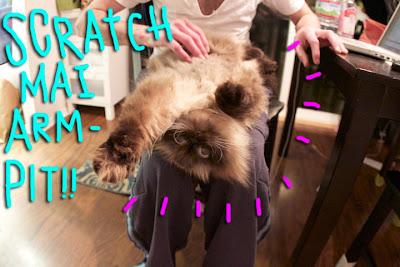 cat-armpit