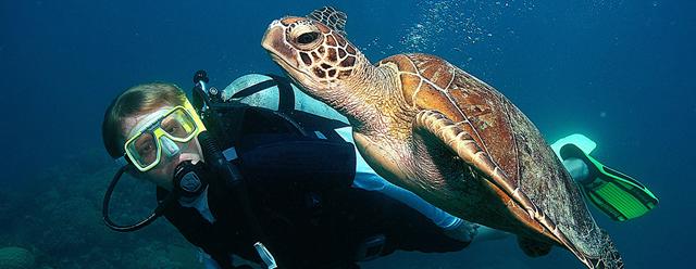 Seven Crafts: Из жизни черепах