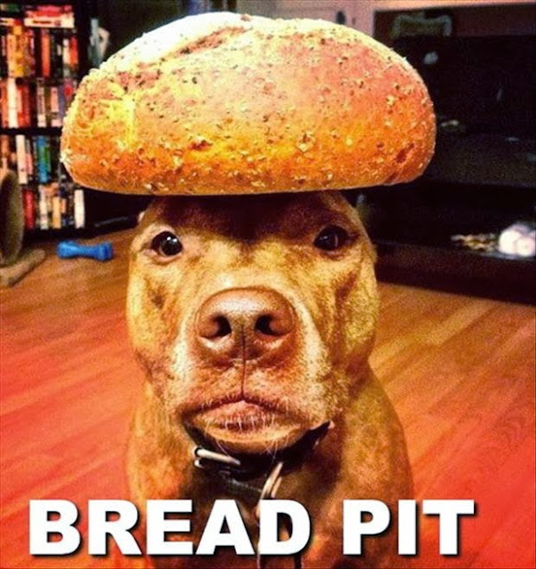 30 Funny animal captions - part 18 (30 pics), funny dog meme, bread pit