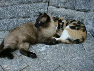 gatos amigos irmãos casal de gatos gatinhos felinos cats kitten kitty