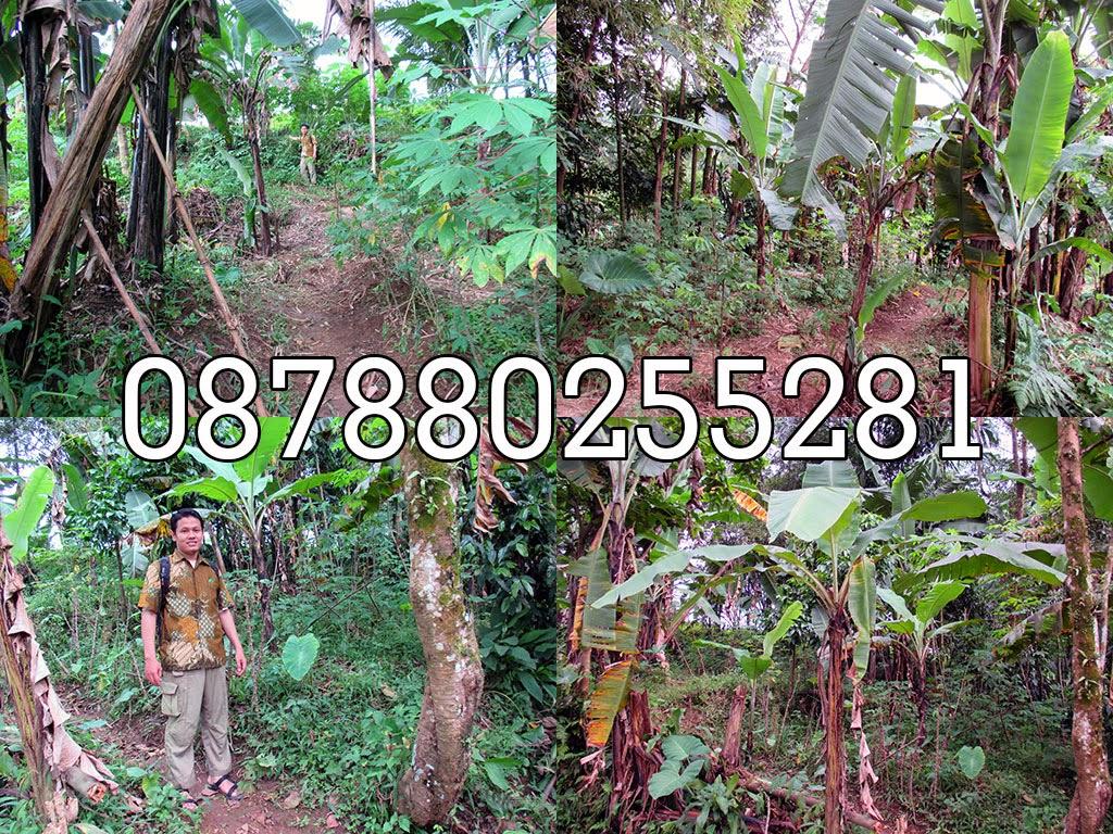 dijual tanah daerah Bogor, IPB Darmaga, Pesantren sahid, STAIT Sahid, tanah murah di Bogor