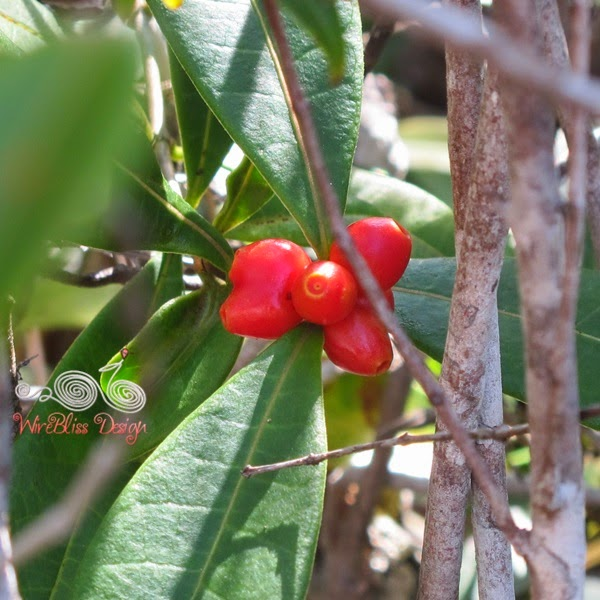 Bako National Park - Red Cherry - WireBliss