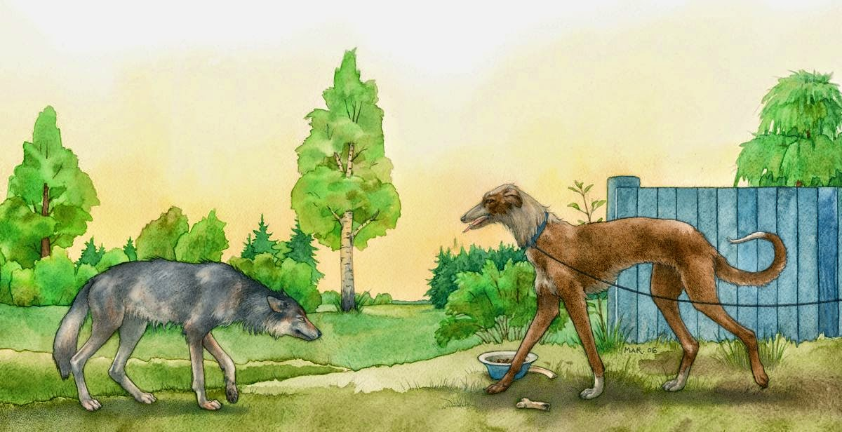 Example A Wolf and A Dog Narrative Text