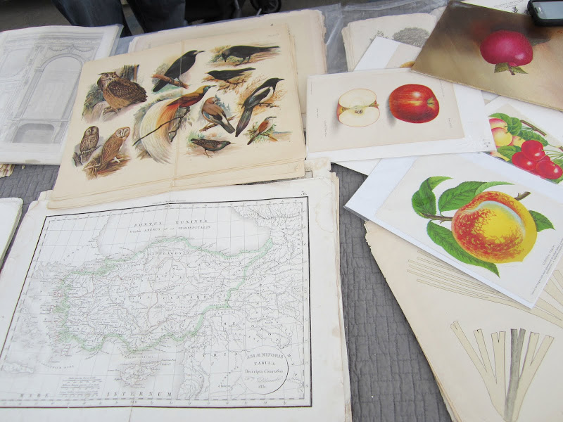 Maps, bird prints and fruit engravings