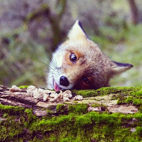 wildlife photography feeding animals konsta  punkka-2