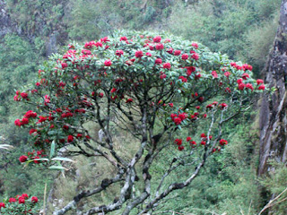 Hoang Lien National Park  3