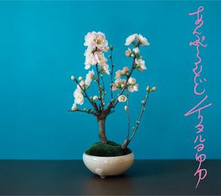 Chirinuruwowaka チリヌルヲワカ - Unplugged Official Kaizokuban あんぷらぐど