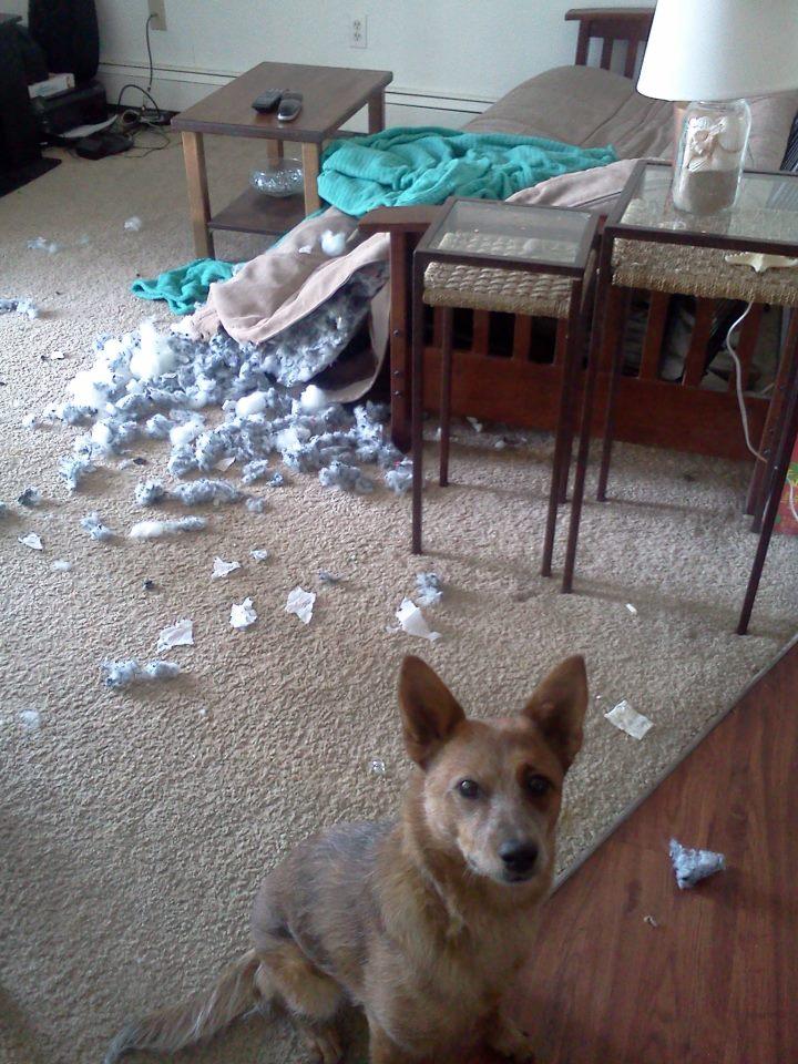 puppies Compreendendo o Comportamento dos Cães