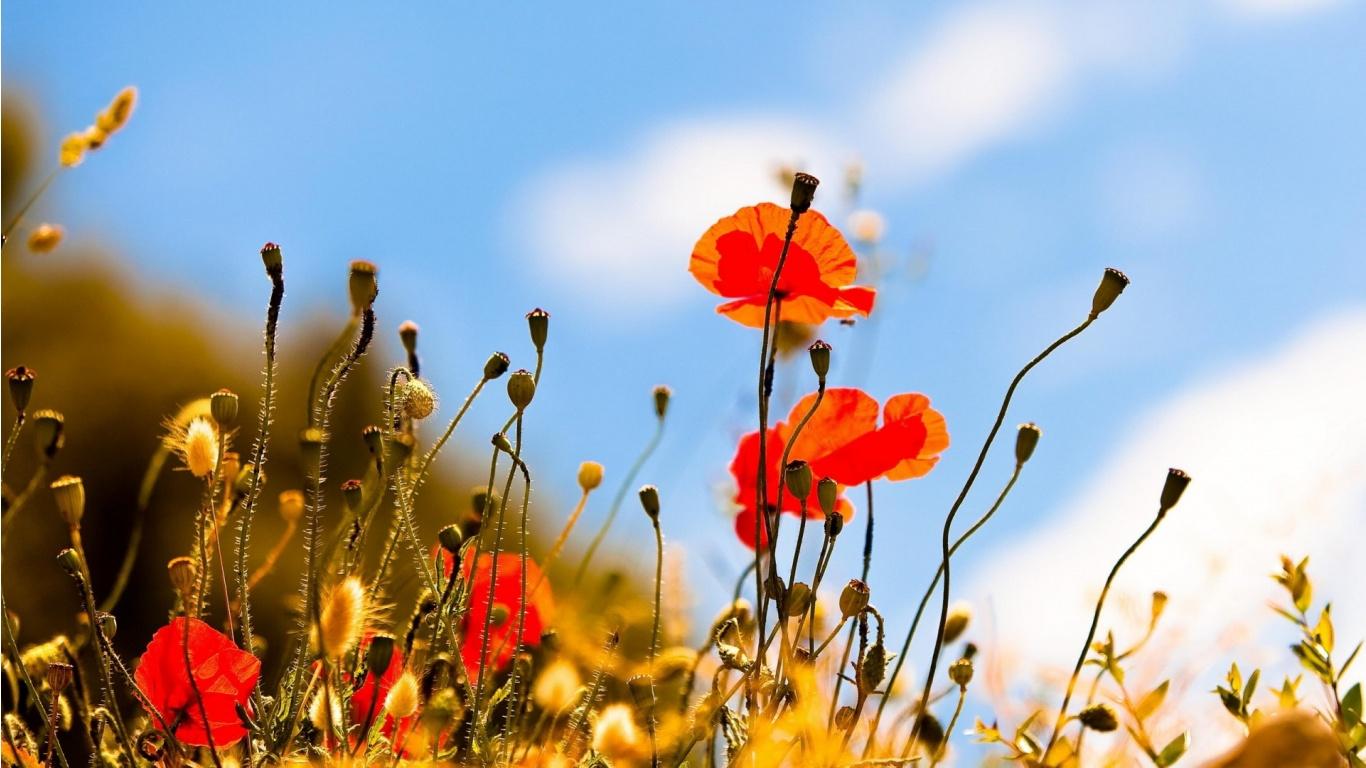 Les plus beau fond ecran fleurs fond ecran pc - Les plus beaux arbustes persistants ...