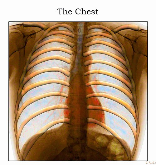 3-D Color Chest X-Ray Image showcasing the Ribcage, Heart and Lungs