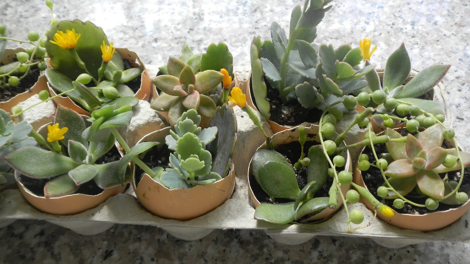 green roof growers easter diy egg succulent project. Black Bedroom Furniture Sets. Home Design Ideas