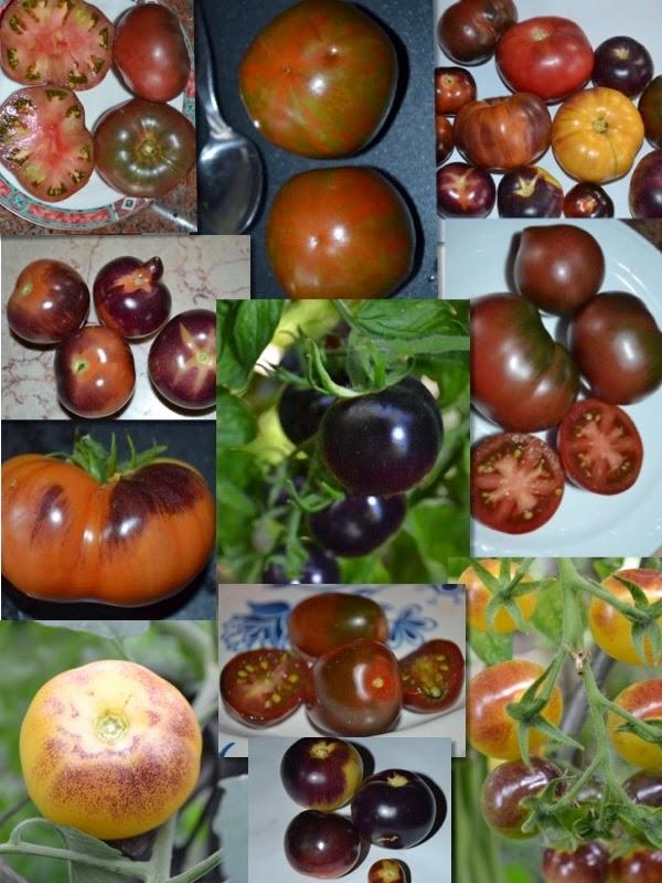 60 tomatensamen von 12 verschiedenen schwarzen und blauen blue tomatensamensorten tomaten. Black Bedroom Furniture Sets. Home Design Ideas