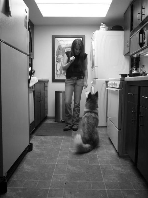 All Things Husky Tips On How To Train A Siberian Husky Dog
