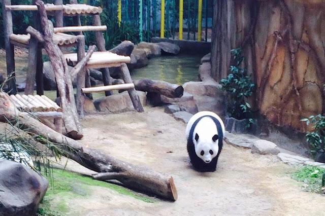 Cara Pergi Ke Zoo Negara
