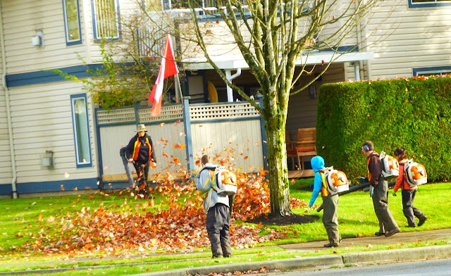 Collecting leaves with leaf-blowers