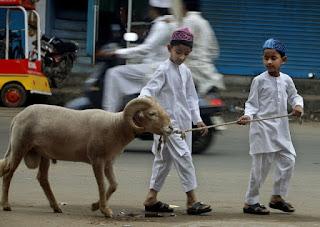 Kurban Qurban Hari Raya Idul Adha