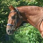 horse riding caboose