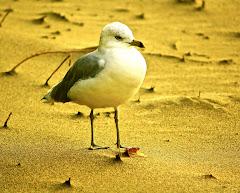 Birds Album