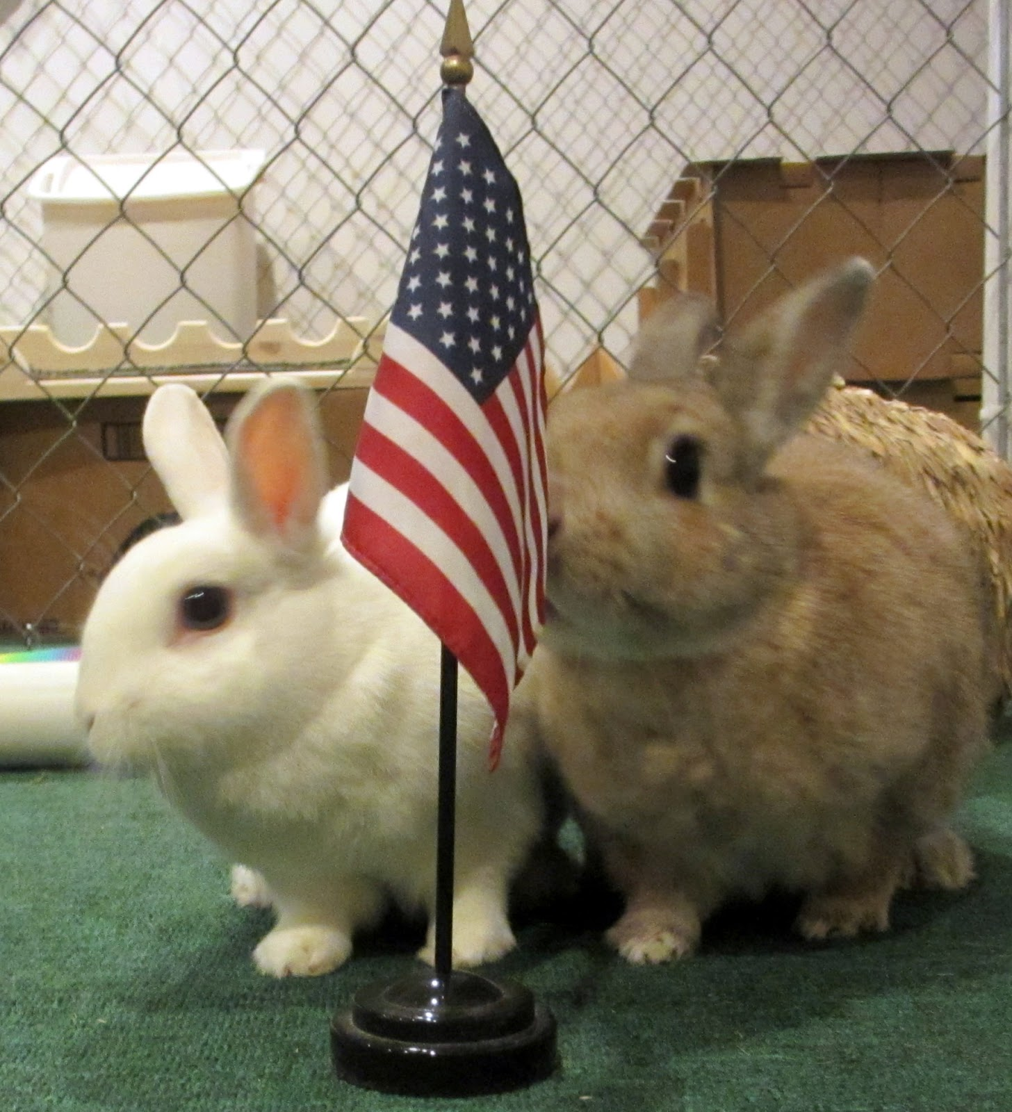 Be Grateful To Be In The Land Of The Free And The Home Of The Buns