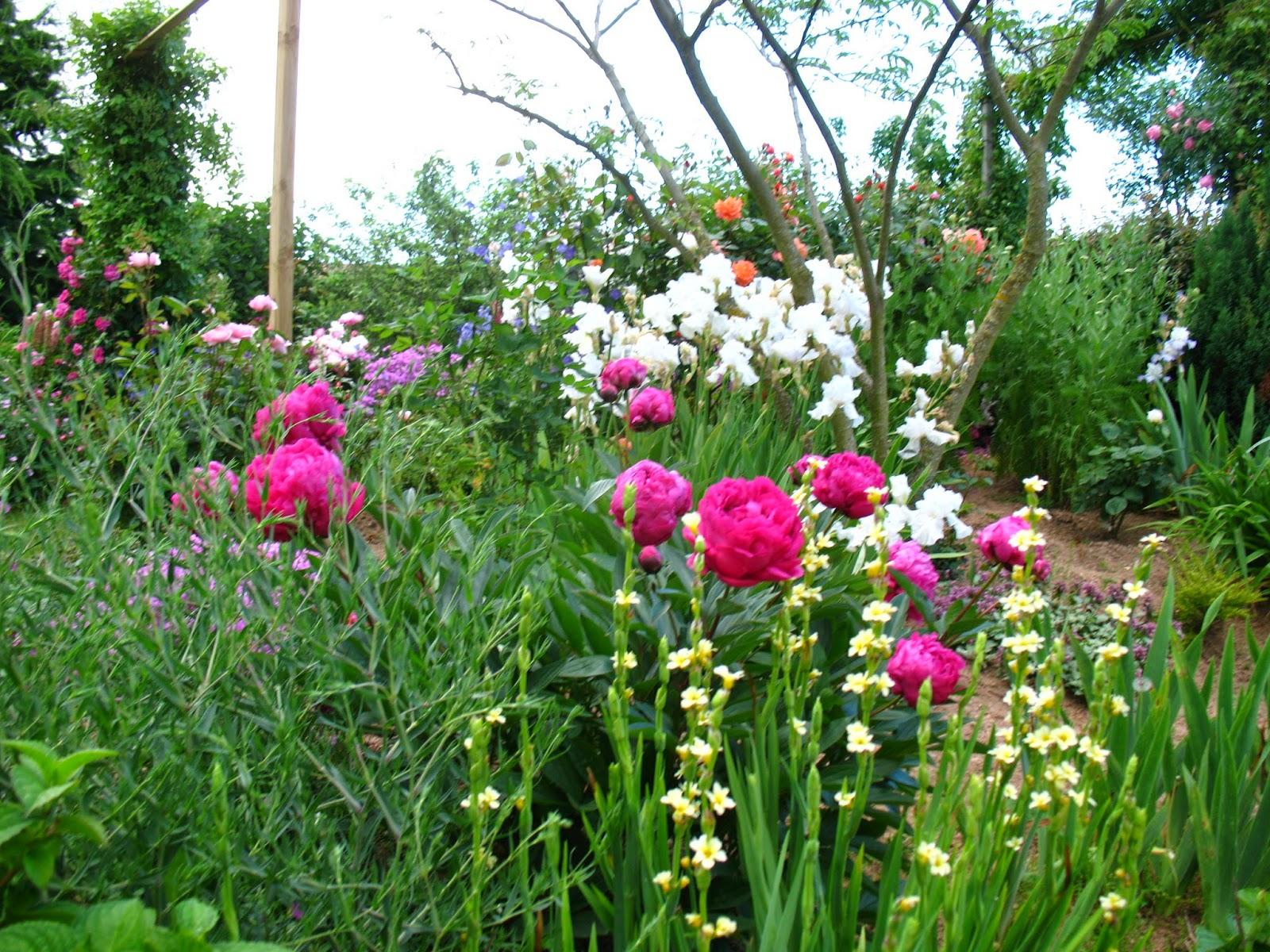 roses du jardin ch neland tuteurer les pivoines. Black Bedroom Furniture Sets. Home Design Ideas