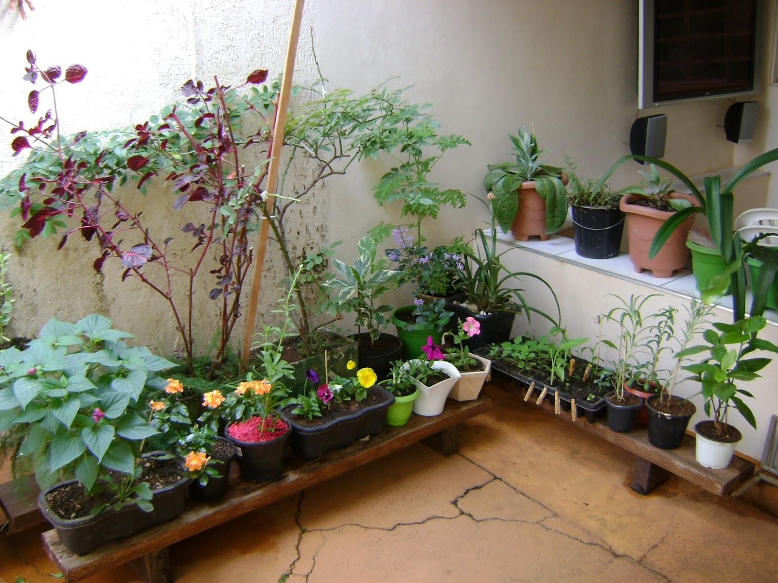 de um jardim floridoDiário de uma Sementeira Um pouco do meu jardim