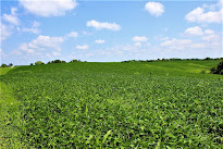 Farmland, 50th Ave., Baldwin 102.34 Acres *SOLD*