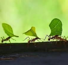 makna dibalik kerja semut