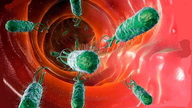Условно патогенные бактерии влагалища