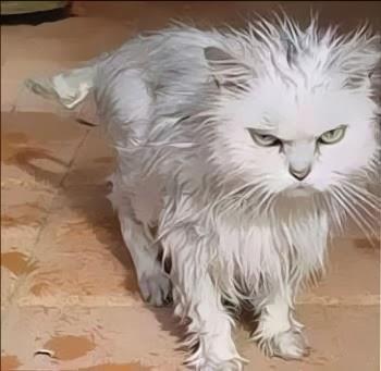 Come fare il bagnetto al gatto - Come fare il bagno al gatto ...