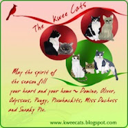 Kwee Cats