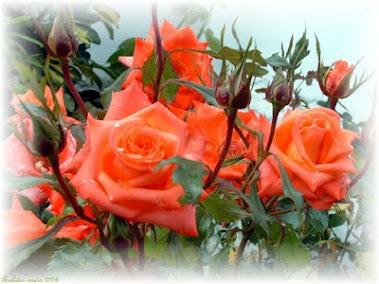 Flores para ti!!!
