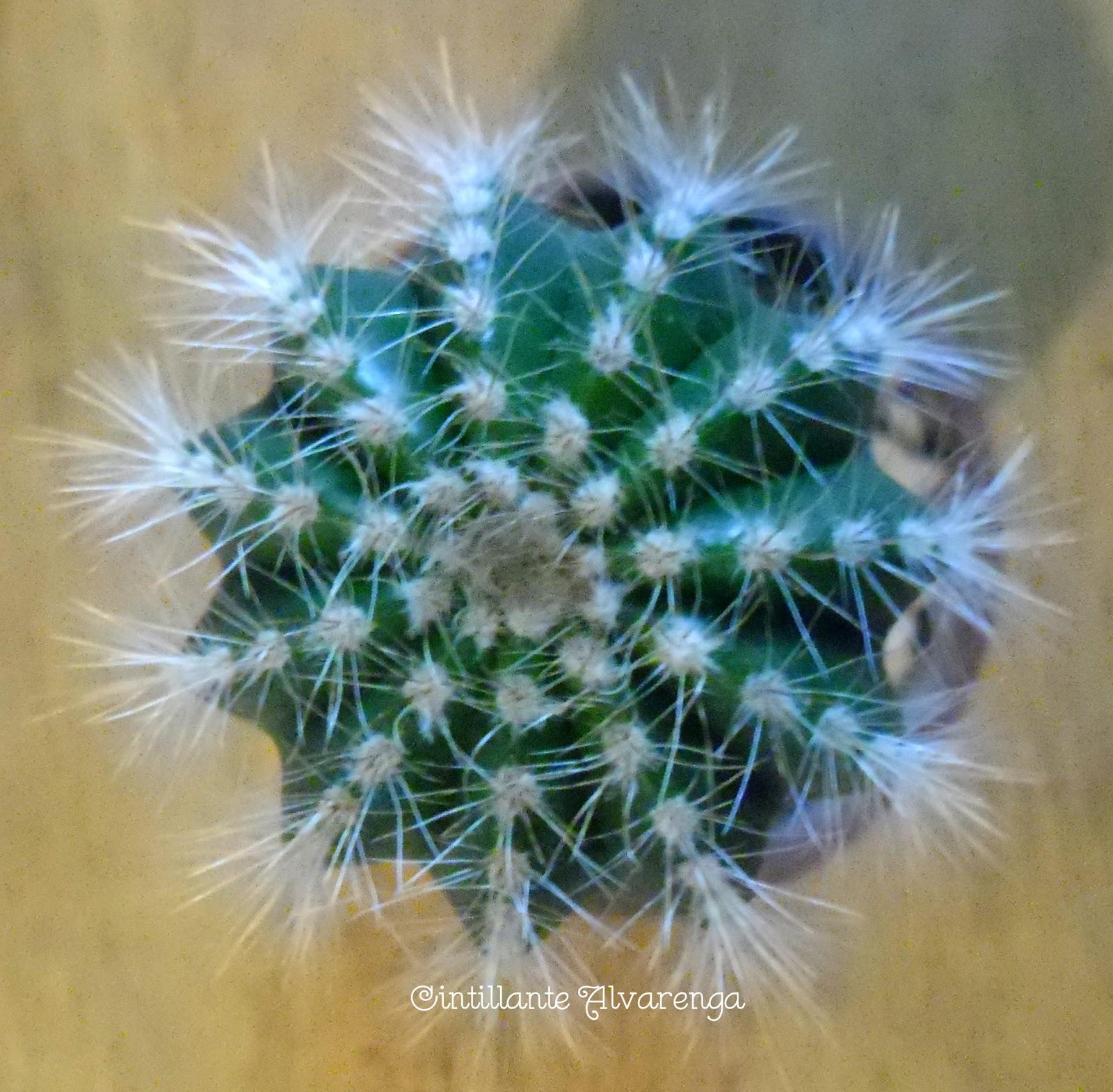 Colecionando cactus