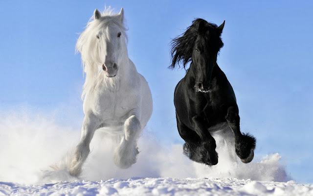 Caballos Blanco y Negro Corriendo en la Nieve