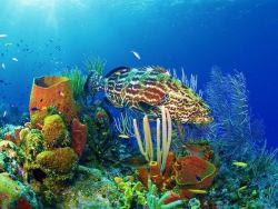sfondi mare e pesci 28