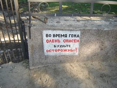 Олень опасен