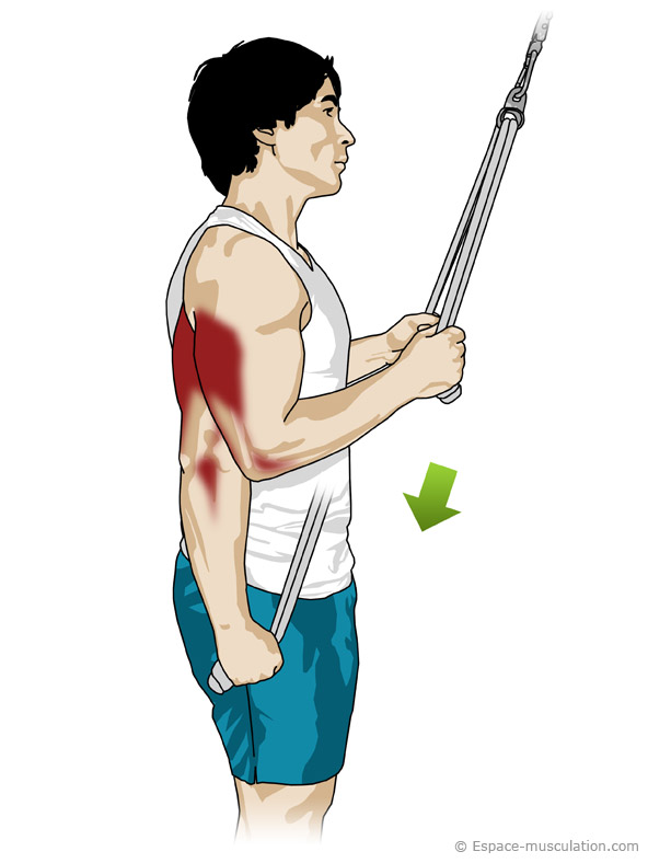 how to make triceps smaller