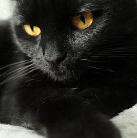 A Nina
