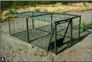 Economics Of Trapping Feral Hogs Box Traps Vs Corral
