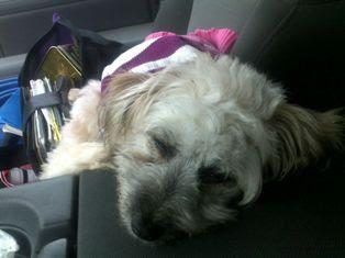 Tess (Humane Society Adoptee)