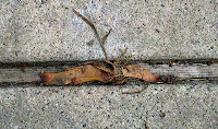 BurnOut II killed crabgrass in walkway